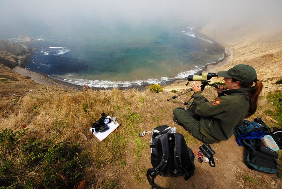 Researcher monitors pinnipeds from coastal overlook at PORE.