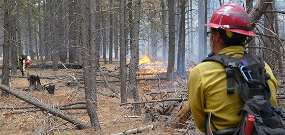 A firefighter monitors a ground fire in a coniferous forest