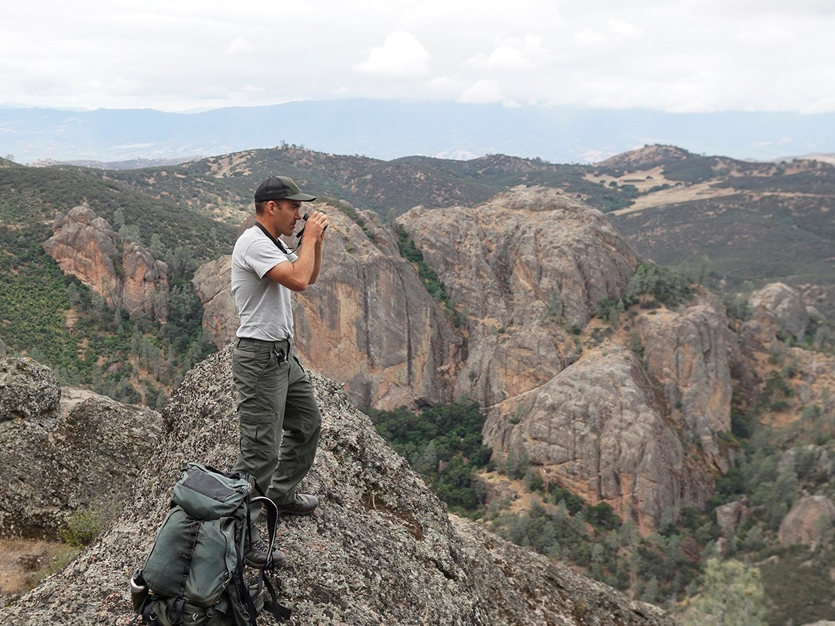 Biologist uses binoculars to observe a red-tailed hawk nest.