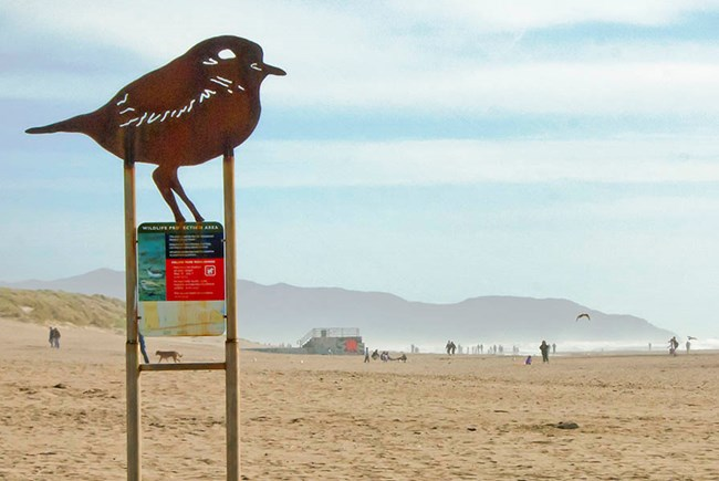 A large sign marks the northern end of the Western Snowy Plover Protection Area on Ocean Beach.