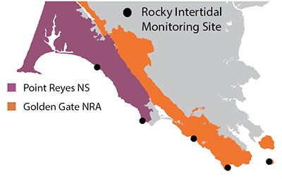 map showing that rocky intertidal monitoring occurs at sites throughout PORE and GOGA