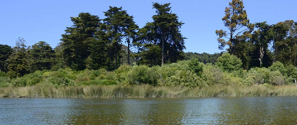 Shoreline at Mountain Lake water quality monitoring site in the Presidio