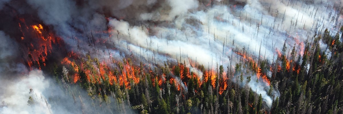 Forest Fires in Yellowstone: the Science of Burning and