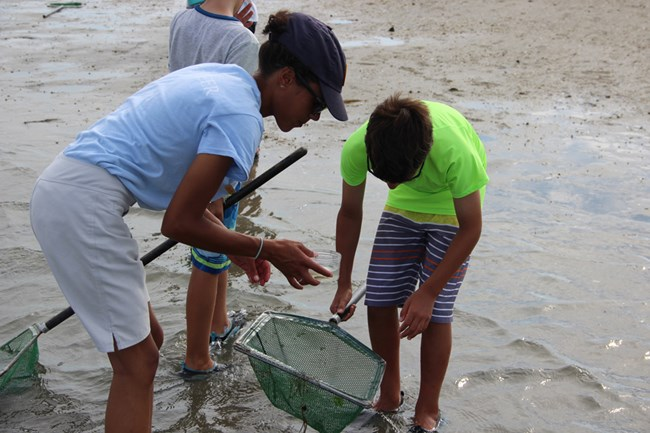 NPS intern and visitor exploring organisms caught in dip net on Marine Explorers program