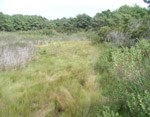 Spartina patens marsh. 24 kb