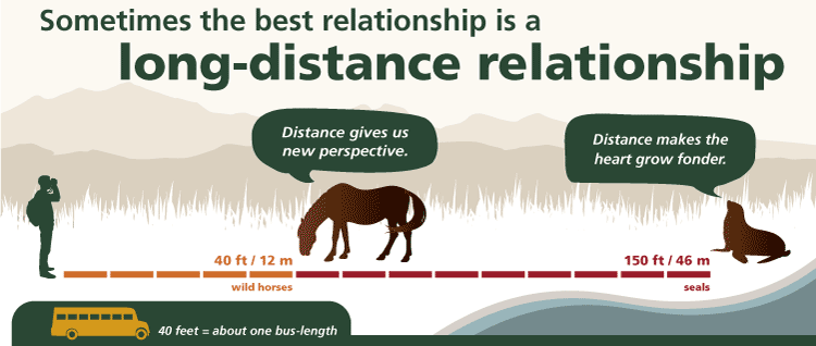 distance visitors should keep from horses and other park wildlife. Shows visitor standing 40 feet from a horse and 150 feet from a seal. shows that 40 feet equals the length of a school bus.