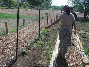 Cadets watering demonstration garden