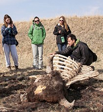 three students and a teacher examine a bison carcass