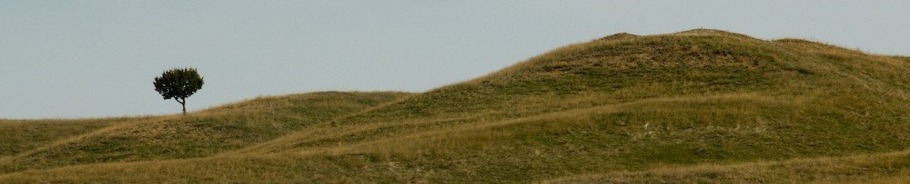 a single juniper stands at the bottom of a gentle prairie slope, which rolls up into a hill on the right.