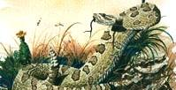 Prairie Rattler by Painter Burt Calkins, 1996 Artist in Residence