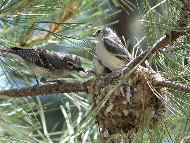 mommy vireo cleans up