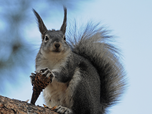aberts-squirrel Youtube Maps Directions on kindle fire maps, star media maps, maroon vintage maps, dirty maroon maps, ios7 maps, more maps, yellow pages maps, united states forest service maps, add gta 5 maps, ifit maps, time magazine maps, top 10 maps, i phone maps,