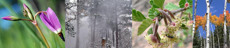 Bandelier's 4 seasons