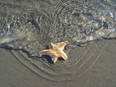 Seastar in the coastal lagoon