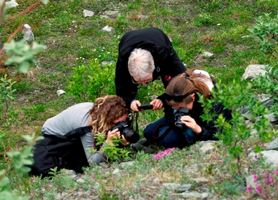 Three women crouch in the green grass all taking pictures of the same patch of pink flowers