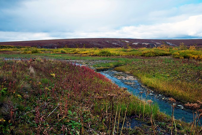 The tundra with fall colors surrounding Arctic Hot Springs.