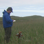 A researcher doing vegetation transects.