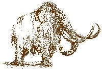 A pencil drawing in brown of a shaggy coated woolly mammoth with long tusks.