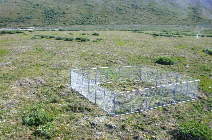Green sloping tundra with a square exclosure of chainlink fence in the middle