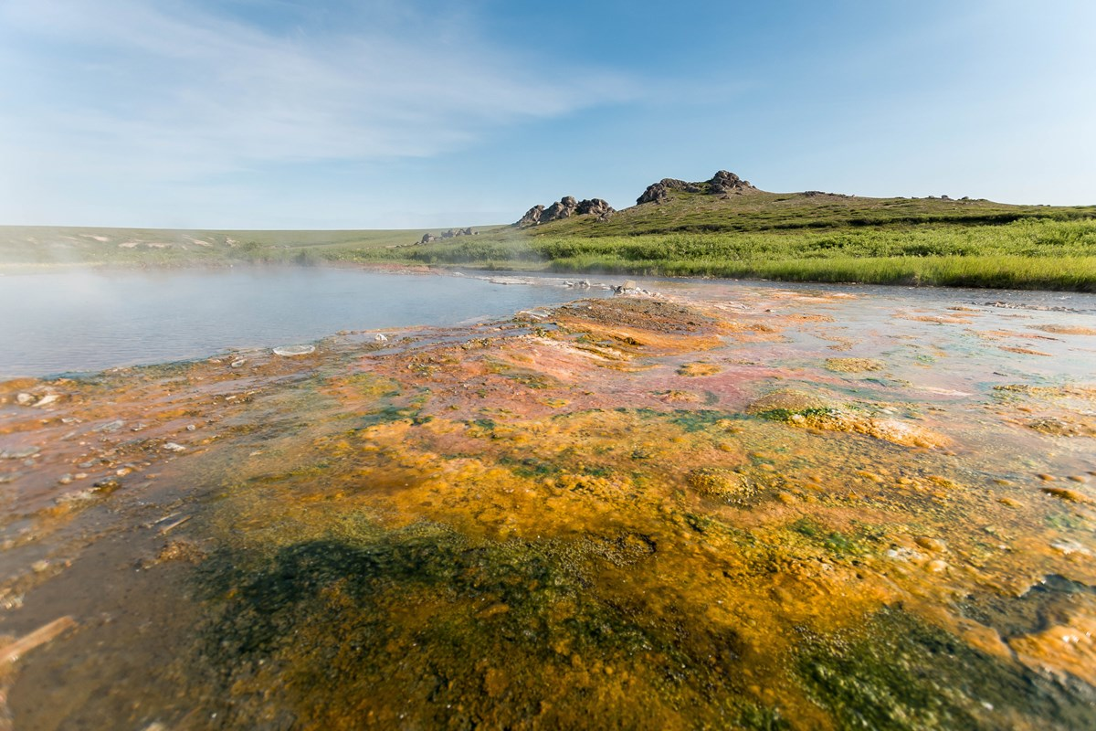 A shallow pool of water is surrounded by algae and a grassy meadow.