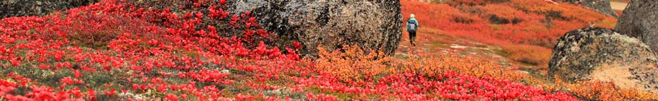 Breathtaking autumn colors in Bering Land Bridge National Preserve