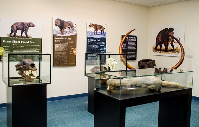 Exhibits and display cases of ice age animals.
