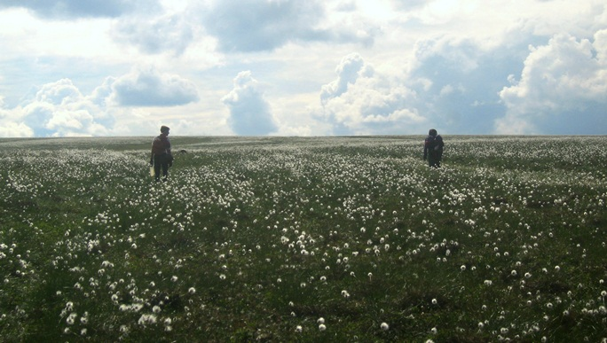 Hikers with Cotton Grass