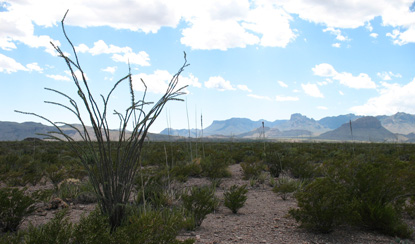 Desert view toward the Chisos Mountains