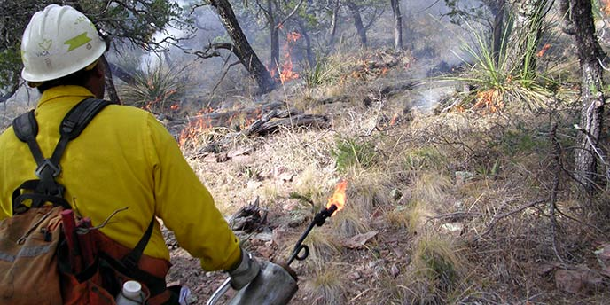 Managing Wildfire