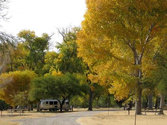 A silver RV sits underneath the shade of large cottonwood trees whose leaves have turned yellow and orange.