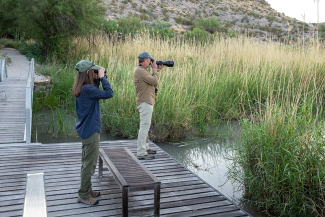 A man and a woman stand on a boardwalk, using binoculars and a camera to look for birds.
