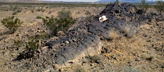 Petrified tree, in situ