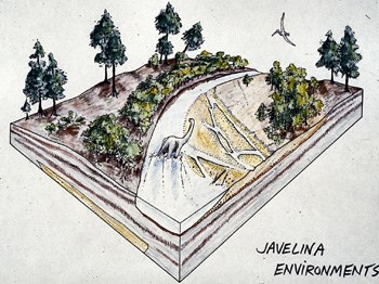Javelina formation environment