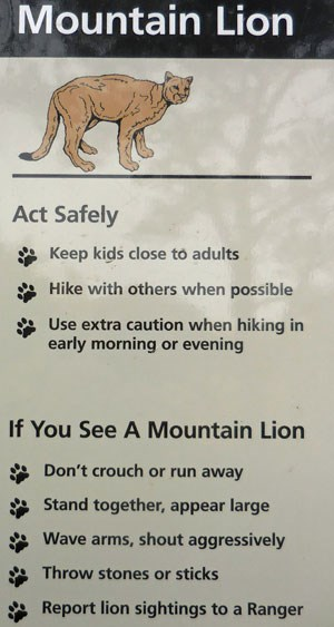 lion safety sign