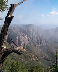 A misty morning in the Chisos Mountains