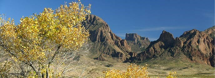 Diversity Makes The Difference Big Bend National Park U
