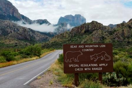 The Chisos Mountains Road