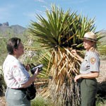 Answering questions about yucca