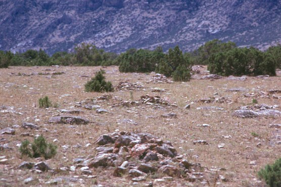 Rock cairns mark the Bad Pass Trail surrounded by juniper at the foot of the Pryor Mountains.