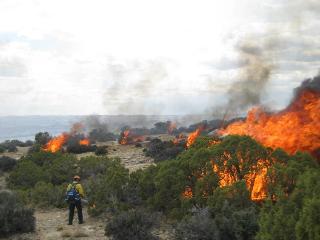 Bighorn Canyon personnel works on a prescribed fire to restore Bighorn Sheep habitat