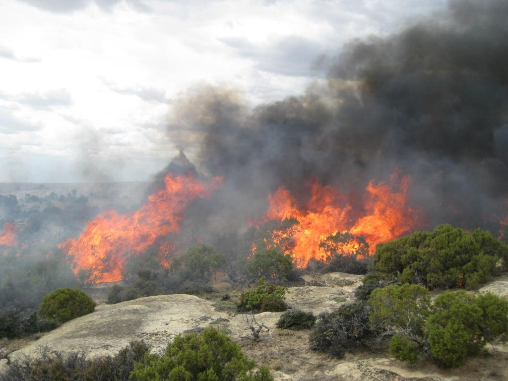 Fire is a powerful tool used at Bighorn Canyon for habitat restoration
