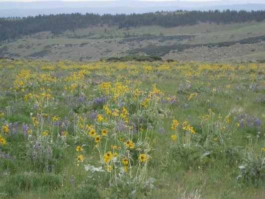 Wildflowers thrive in the meadows just off OK-A-Beh road in the North District.