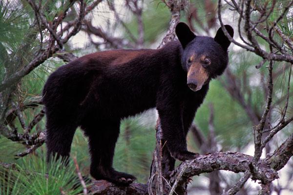 Hardwood Hammocks Big Cypress National Preserve U S