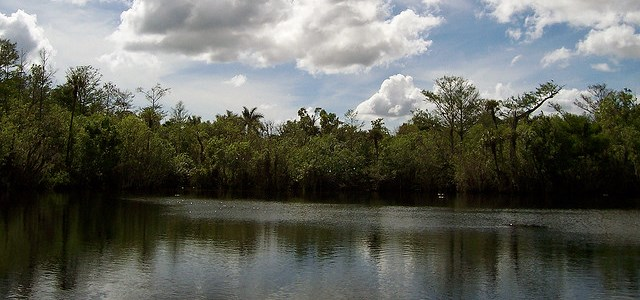 A lake surrounded by thick vegetation on all sides.