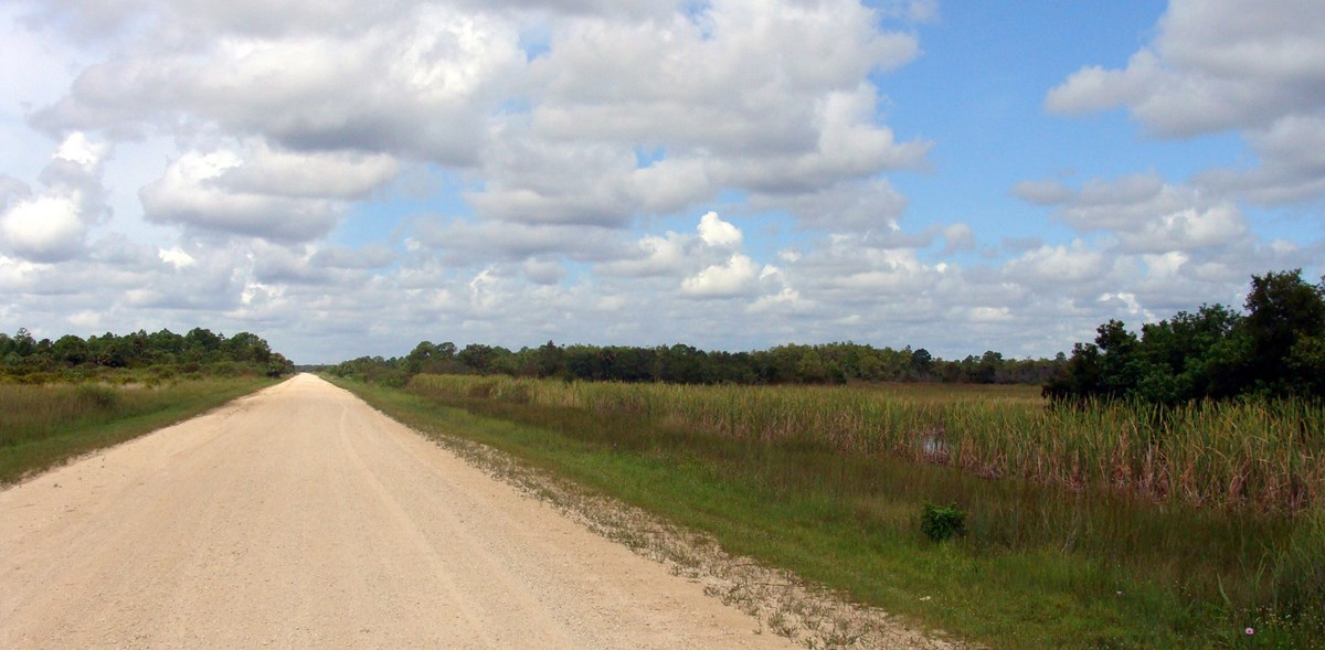 Birdon Road, a dirt road, stretches into the horizon past lush vegetation. Large clouds are in the sky.