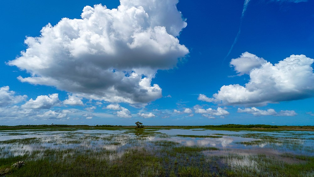 Blue sky and clouds over a grassy swamp