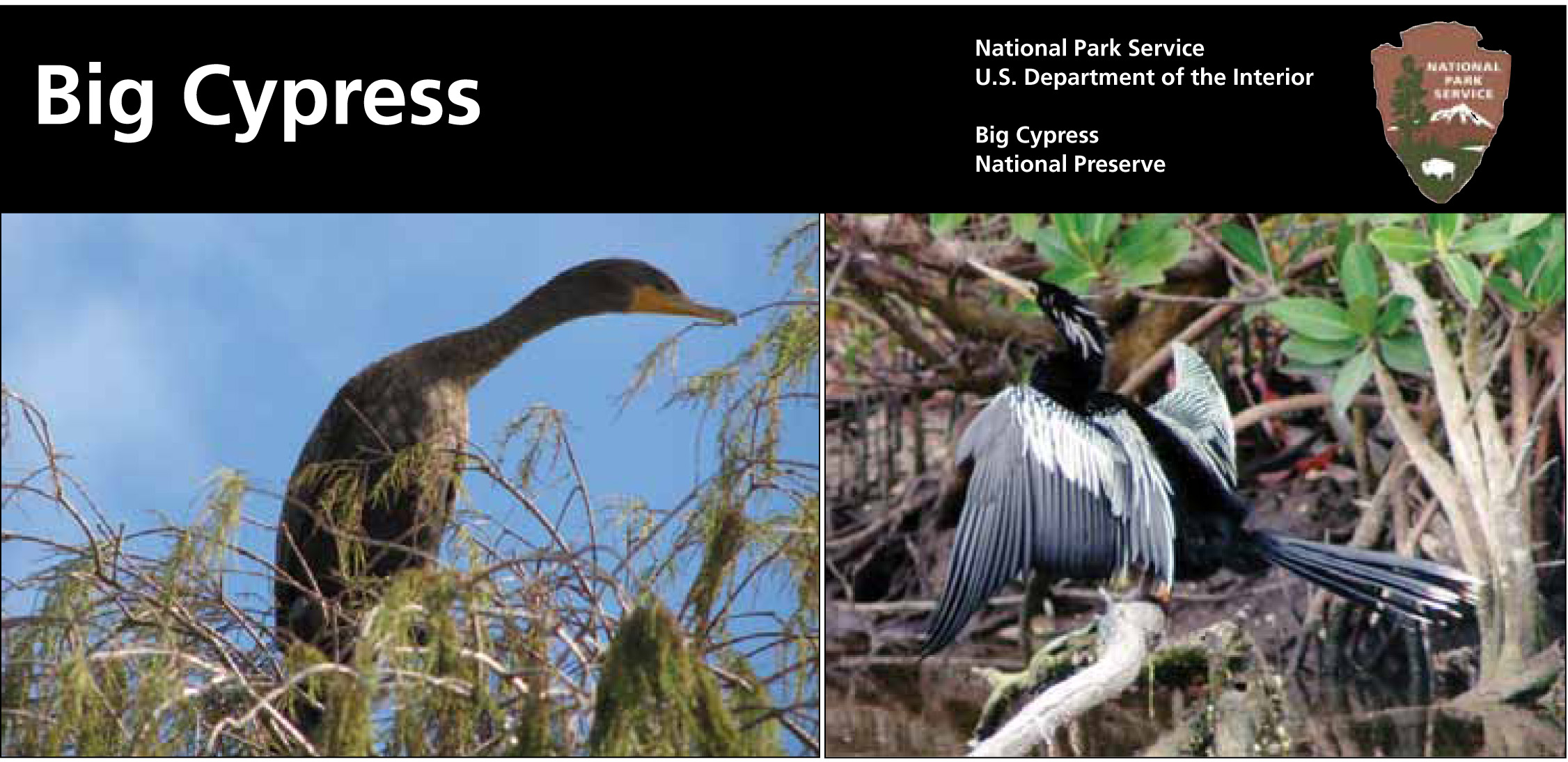 01052010 Anhinga final lo res-1