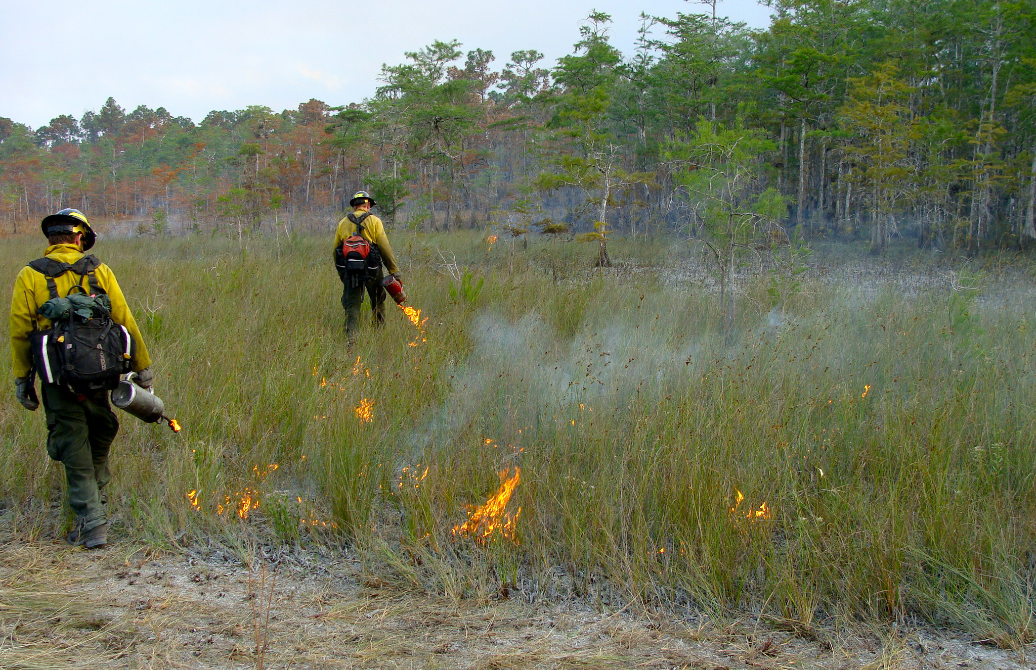 Firefighters starting a prescribed fire