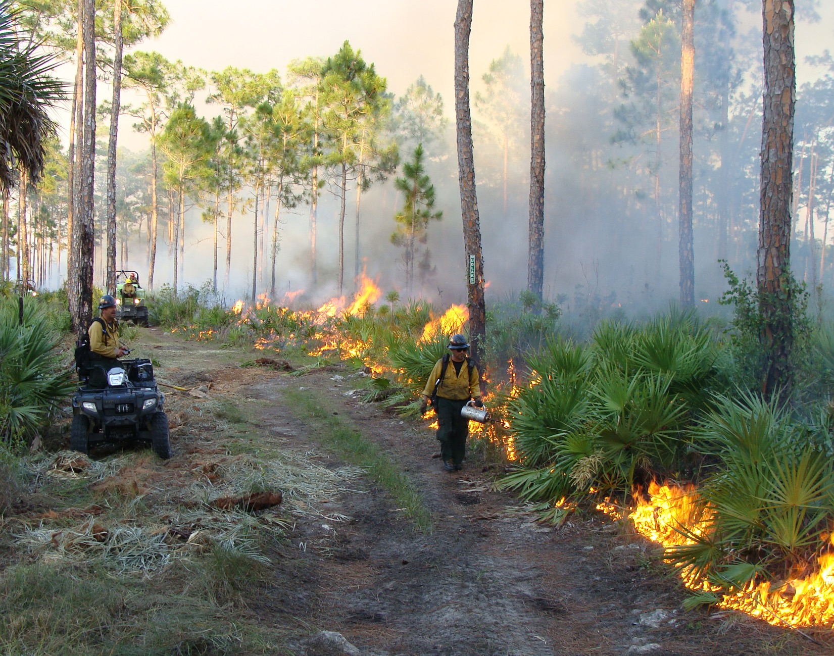 Firefighters maintaining a fireline