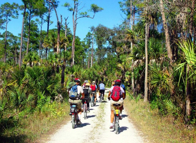A group of cyclists riding on a trail with pines and palms on either side.